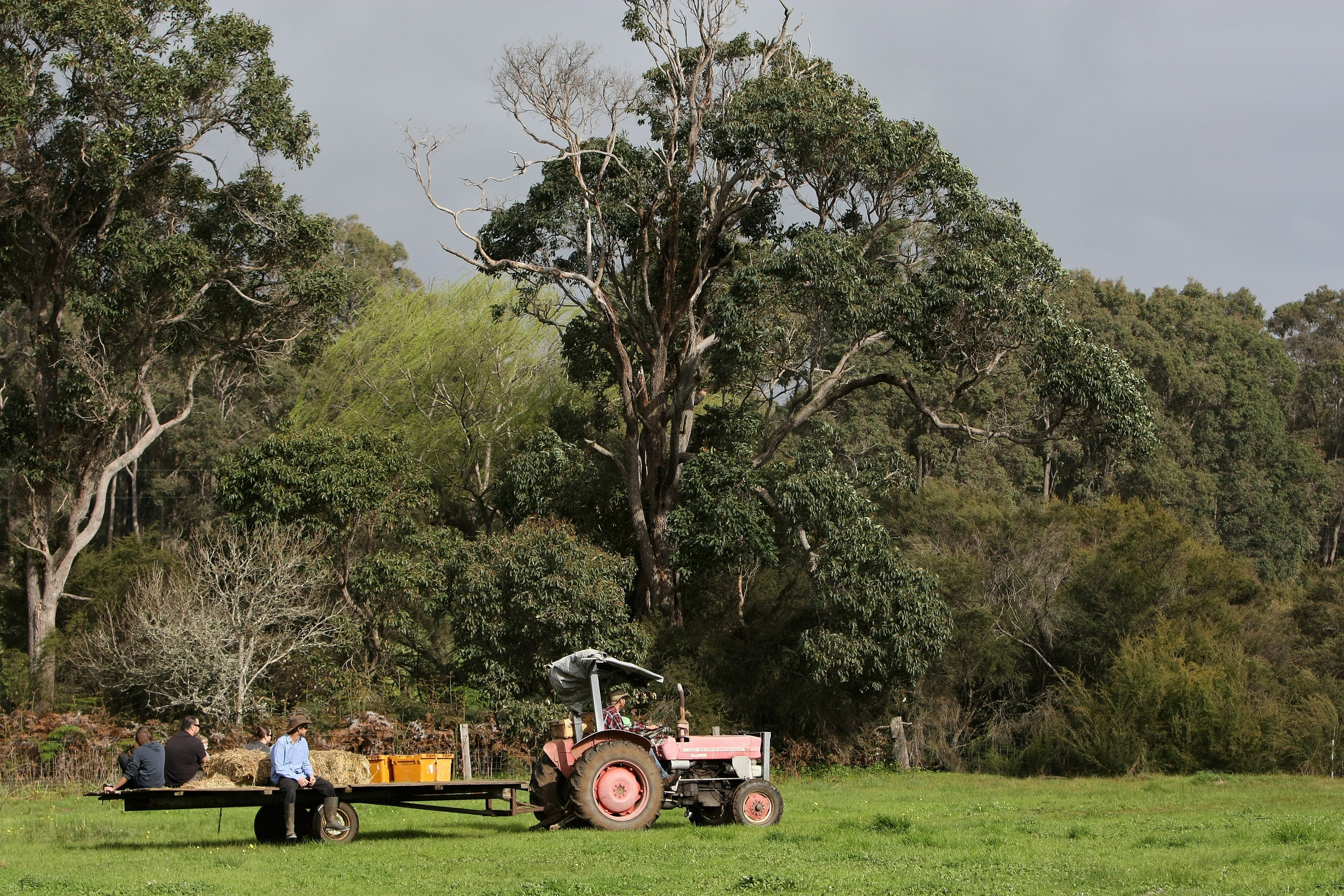 Boronia Farm