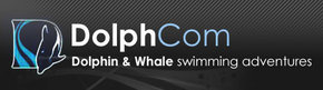 Dolphcom - Dolphin  Whale Swimming Adventures