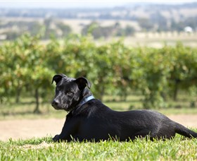 Moothi Estate Vineyard and Cellar Door