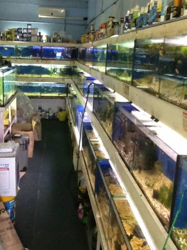 Clearwater Aquariums