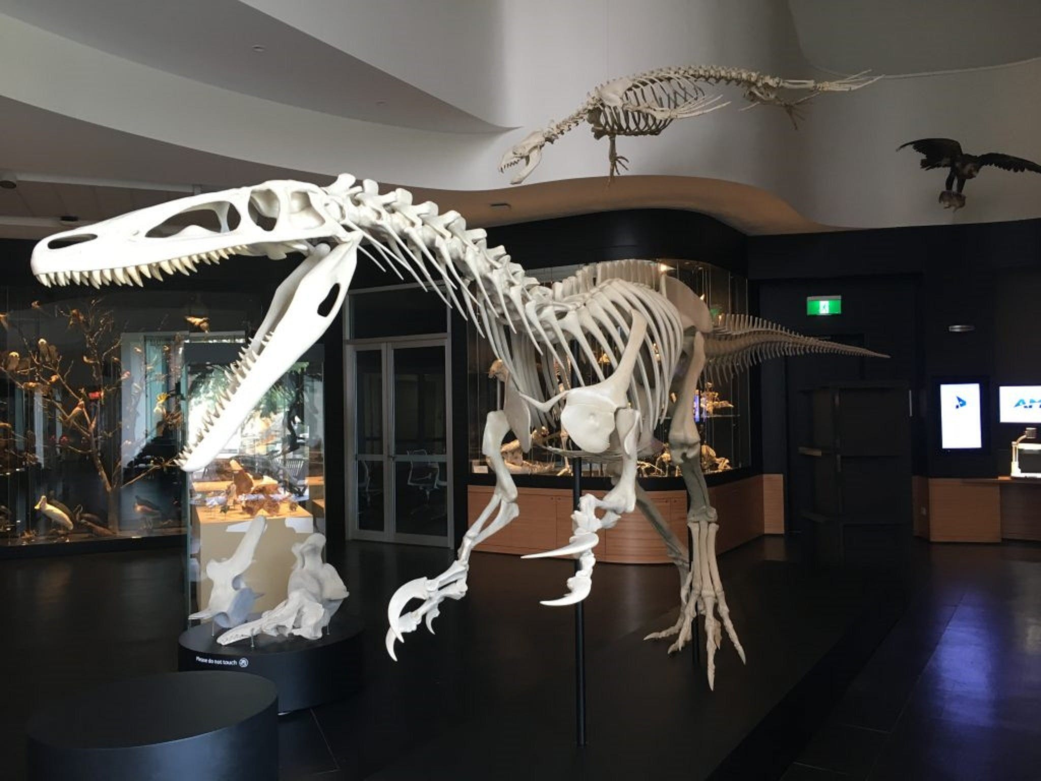 UNE Natural History Museum