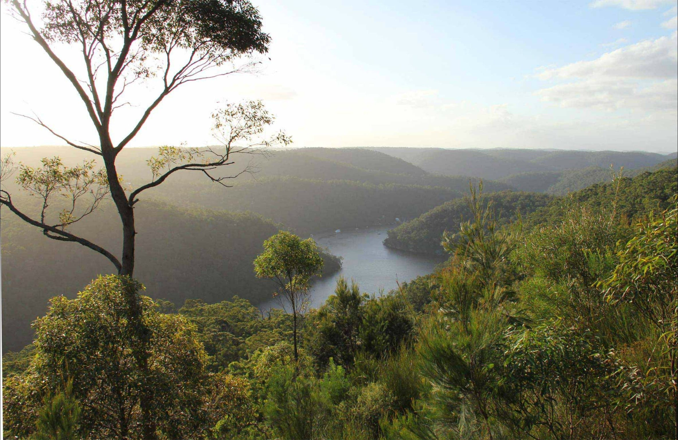 Great North walk - Berowra Valley National Park