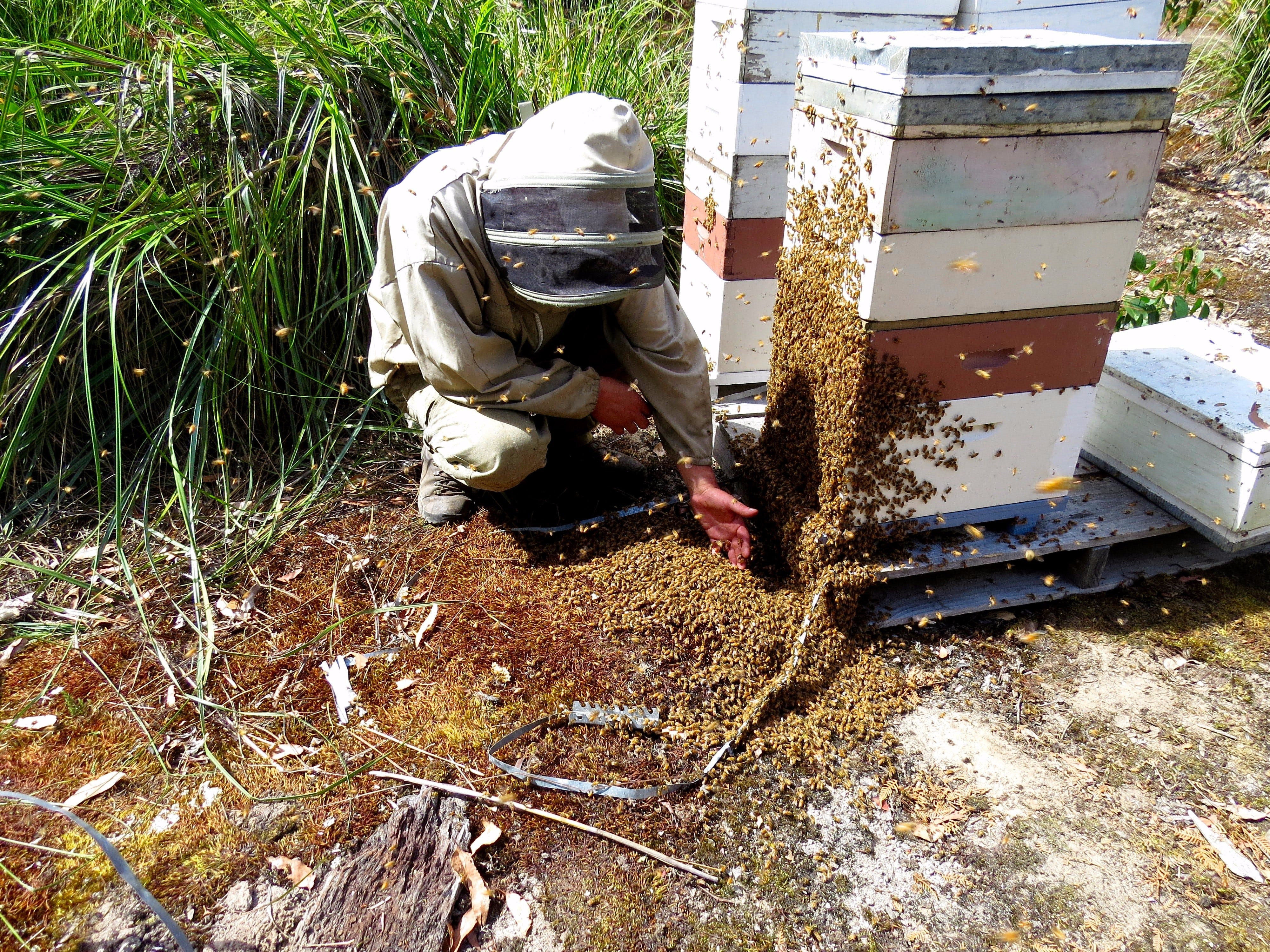 Honey Tasmania - The Beehive